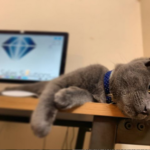 What a Cat Taught me about Sales